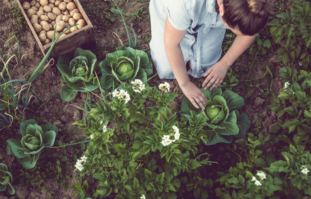 What to Plant When: Tennessee Spring Gardening Guide